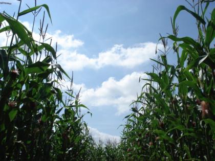 Maize Maze 2016 ONLINE PRICES