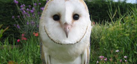Lightwater Valley Falconry