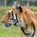 Animal Adoptions @ Wingham Wildlife Park