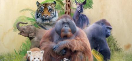 Animal Adoption Pack
