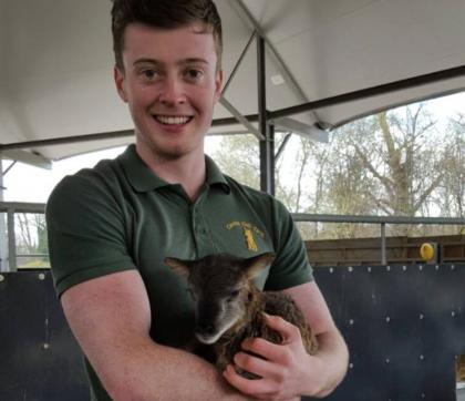 Lambing Live 2017