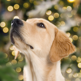 Santa Paws Dog Grotto - from 18th November - dates and times vary