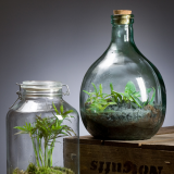 Notcutts Rivendell - Build your own terrarium - 14th February 2020