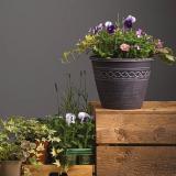Notcutts Rivendell - Create your own festive planted container - 22nd November 2019
