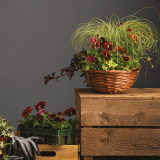 Notcutts Rivendell - Create your own festive hanging basket - 22nd November 2019