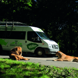 Baboon Bus