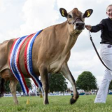 Royal Bath & West Show 29th May-1st June 2019