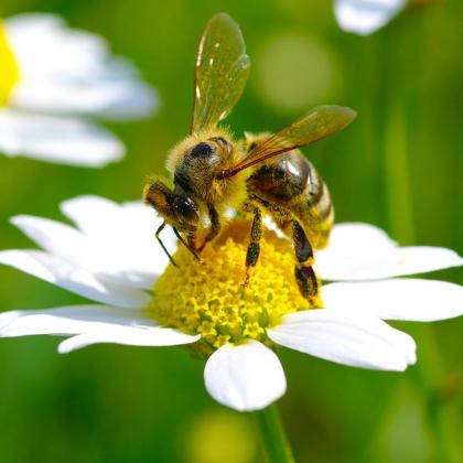 Wychbold Beekeeping Taster Courses 2018