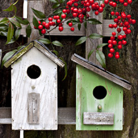 Bird Feeder Workshop