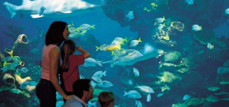 Blue Planet Aquarium - £2 off for up to 6 people.