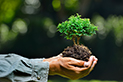 Create your own living Bonsai - Brampton