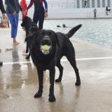 Main Pool Dog Day 2021