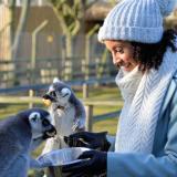 Animal Experience Vouchers @ Wingham Wildlife Park