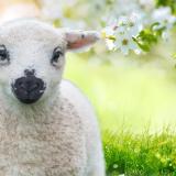 Lambing Is Back (15th- 23rd Feb)