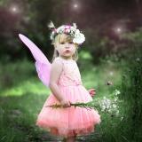 Fairies On the Farm