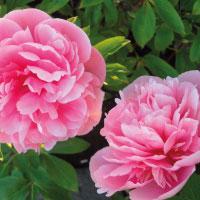 Flower Power Plant Fayre