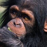 Φίλος του Πάρκου / Friends of the Zoo