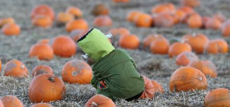 Spookley Pumpkin Festival 2019