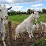 Amerton Farm - Standard Entry