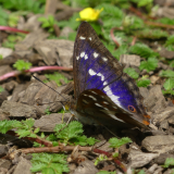 ODL Talk: Wildlife in the Park - A Year in Howe Park Wood