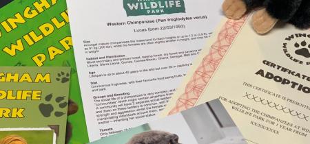 Animal Adoption Gift Boxes @ Wingham Wildlife Park
