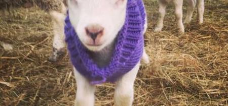 February Half Term - Lambing Festival