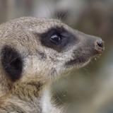 Membership Direct Debit Scheme 2019 @ Wingham Wildlife Park