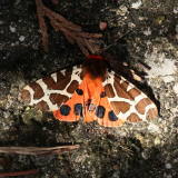 ODL Workshop: Magnificent Moths