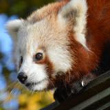 Disabled Membership Direct Debit Scheme 2019 @ Wingham Wildlife Park