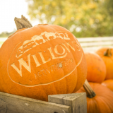 Pumpkin Festival 19 Oct - 3 Nov 2019