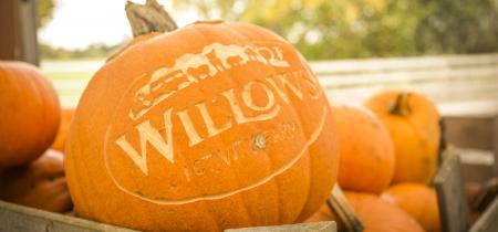 Pumpkin Festival 19 Oct - 3 Nov 2019