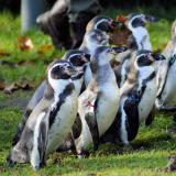 Membership 2019 @ Wingham Wildlife Park