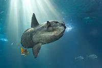 Sunfish Donations