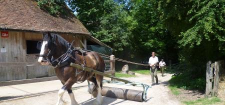 Heavy horse courses