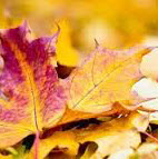 Pruning and Autumn Tidy Event - October 13th & 14th