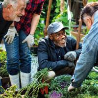 Understanding Your Garden