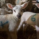 Shepherd Experience