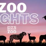 Zoo Nights
