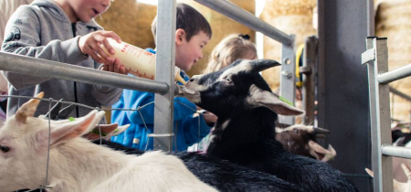 February Half Term - Baby Goats Galore