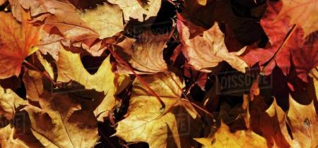 Autumnal Afternoon Tea Train