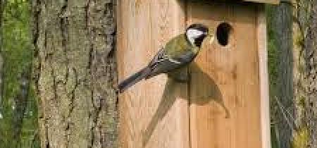 Make a Bird Box