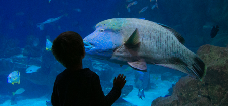 Aquarium Birthday Parties:  5 - 12 years old
