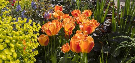 Charleston's Spring Garden