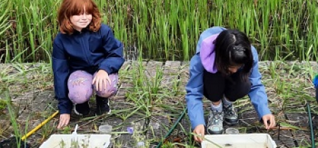 Family Pond Dipping at Linford Lakes Nature Reserve