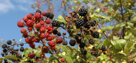 Introduction to Foraging