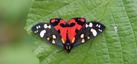 Explore: Magnificent Moths