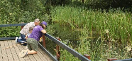 Family Pond Dipping at Howe Park Wood