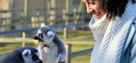Ring Tailed Lemur Experience - Book Now!