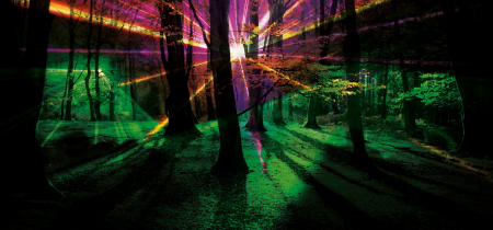 Magical Woodland Lightshow