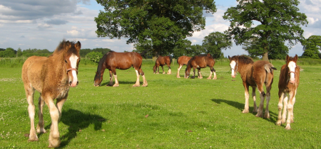 Cotebrook Shire Horse Centre - Residents' Festival - FREE ENTRY